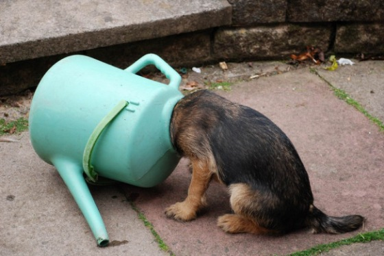 the-worlde28099s-top-10-best-images-of-dogs-with-their-heads-stuck
